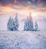 Beautiful winter sunrise in mountains Royalty Free Stock Image
