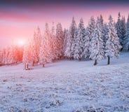 Beautiful winter sunrise in mountains. Stock Photos