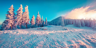 Beautiful winter sunrise in the mountains. Stock Photos