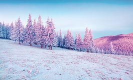 Beautiful winter sunrise in the mountains. Stock Photo