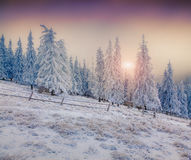 Beautiful winter sunrise in the mountains. Royalty Free Stock Photography