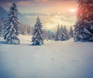 Beautiful winter sunrise in the mountains. Stock Image