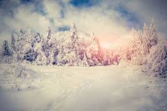 Beautiful winter sunrise in the mountains. Royalty Free Stock Photo
