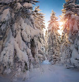 Beautiful winter sunrise in ountain forest Royalty Free Stock Image