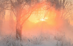 Beautiful winter sunrise on the river Stock Images