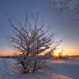 Beautiful winter sunset Stock Image