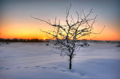 Beautiful winter sunset Royalty Free Stock Photography
