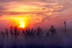Beautiful winter sunset over the trees. In the fog royalty free stock photo