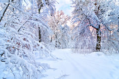 Beautiful winter Royalty Free Stock Photos