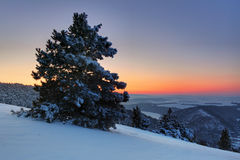 Beautiful winter sunset with trees Royalty Free Stock Image
