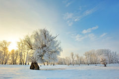 Beautiful winter sunset with trees Stock Images