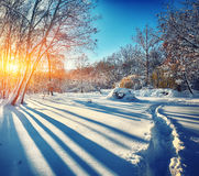 Beautiful winter sunset with trees in the snow Royalty Free Stock Image