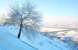 Beautiful winter tree in strong frost and pink blue sky Royalty Free Stock Photography