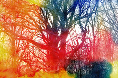 Beautiful Winter Trees Stock Images