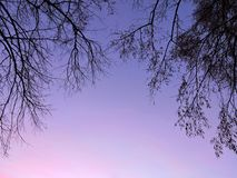 Old trees branches in sunrise colors Royalty Free Stock Photography