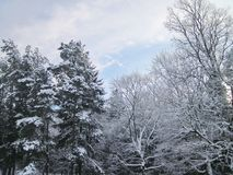 Beautiful winter trees, Lithuania Royalty Free Stock Photography