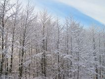 Beautiful winter trees, Lithuania Royalty Free Stock Images