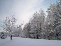 Beautiful winter trees, Lithuania Royalty Free Stock Photo