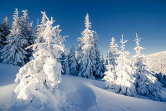 Beautiful winter trees Royalty Free Stock Photography