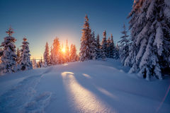 Beautiful winter trees Stock Image