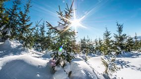 Beautiful Winter View Snowy Trees Dolly Timelapse 4k. Motion controlled time-lapse of a winter panorama in the polish mountains stock video footage