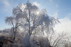 Beautiful winter weather with snow-white trees and reeds near th Royalty Free Stock Image