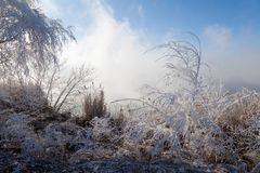 Beautiful winter weather with snow-white trees and reeds near th. E lake. White fog on background Royalty Free Stock Image