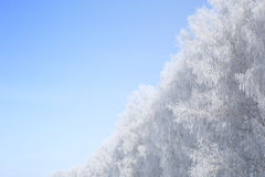 Beautiful winter white snowy with snow on tree branches Stock Photos