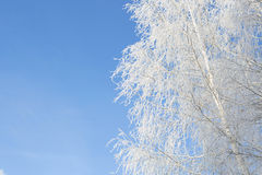 Beautiful winter white snowy with snow on tree branches Royalty Free Stock Photos