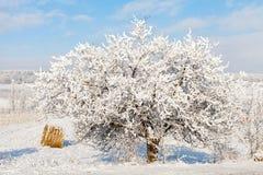 Beautiful wintertime Royalty Free Stock Photos