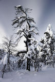 Winter wonderland in twilight, Finland Royalty Free Stock Photo