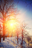 Beautiful wintry view on hill with leafless trees on sunrise ins Stock Image