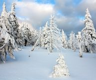 Snowy wood on mountains Royalty Free Stock Image