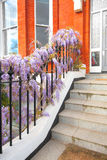 Beautiful wisteria flowers outside the house Royalty Free Stock Images