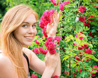 Beautiful woman admires the roses in the garden Stock Photography