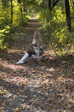The beautiful woman in the autumn wood lifted a leaf, in the mid Stock Image
