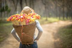 Beautiful woman with  basket of colorful flower. Walking in the forest Stock Images