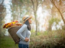 Beautiful woman with  basket of colorful flower. Walking in the forest Stock Photography