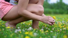 Beautiful woman in blooming field collects bouquet of yellow flowers in summer day. Beautiful woman is sitting in blooming field collects bouquet of yellow stock video