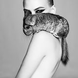 Beautiful woman with chinchilla Stock Images