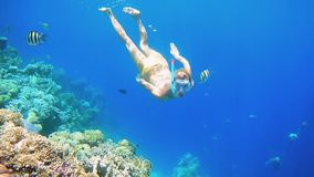 Woman dive underwater in snorkeling diving mask. Beautiful woman dive underwater in snorkeling diving mask into clear blue sea water. Tropical underwater reef stock footage