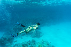 Beautiful woman diver swimming among the coral reef sea. Beautiful woman diver swimming among the coral reef Stock Photography