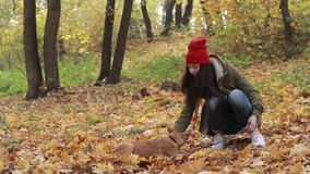 Beautiful woman with dog playing in autumn park stock footage