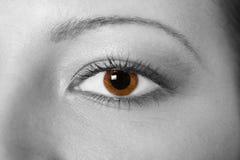 Beautiful woman eye. Grey image Royalty Free Stock Images