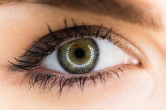 Beautiful woman eye against white background Stock Images