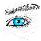 Beautiful Woman Eye And Brow. Vector illustration Royalty Free Stock Image