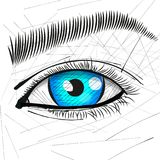 Beautiful Woman Eye And Brow. Vector illustration Royalty Free Stock Photo