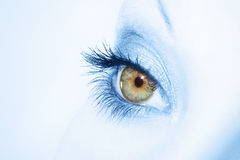 Beautiful woman eye Royalty Free Stock Photos