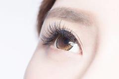 Beautiful woman eye. With long eyelashes. asian model royalty free stock photography