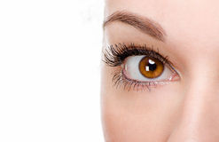 Beautiful woman eye with make-up Royalty Free Stock Photo